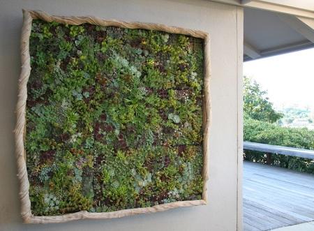 liana-vine-framed-garden